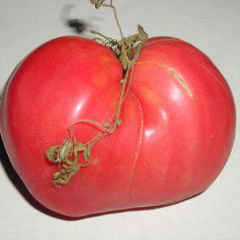 Великан семена томата индет. среднепозднего 90 дн. окр.-прип. до 1 кг. (Semo)