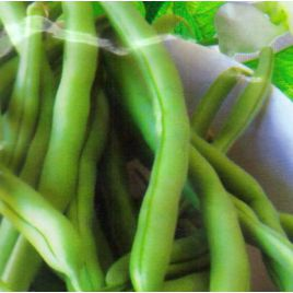 Монтана семена фасоли спаржевой зел. (GL Seeds)