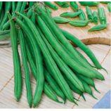 Скуба семена фасоли спаржевой (SAIS)