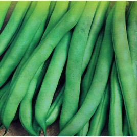 Скуба семена фасоли спаржевой (Satimex)
