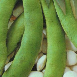 Файний Ясь семена фасоли спаржевой (Украина)