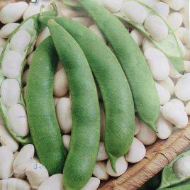 Файный Ясь семена фасоли овощной кустовой средней бел. (GL Seeds) НЕТ ТОВАРА