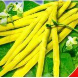Чародейка семена фасоли спаржевой (GL Seeds)