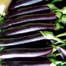 Айдин Сияши семена баклажана (May Seeds)