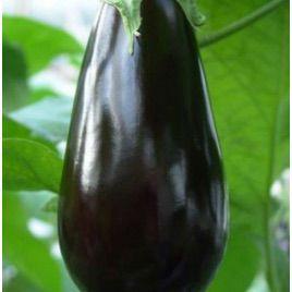 Багира F1 семена баклажана тип Алмаз раннего 100 дн. 250 гр. 12-20 см (Гавриш) НЕТ СЕМЯН