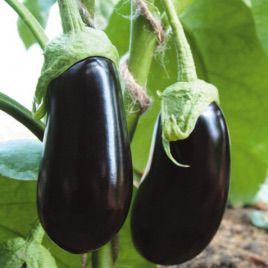 Альмалик семена баклажана (Гавриш)