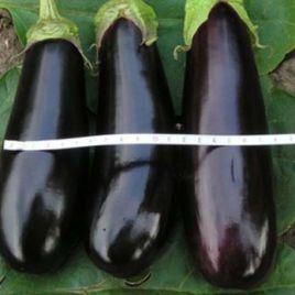 Коломбо семена баклажана (Свитязь)