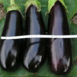 Коломбо насіння баклажана (Світязь)