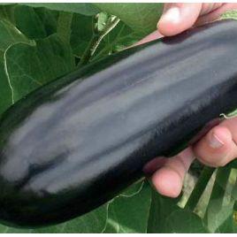 Найт Леди F1 семена баклажана раннего 75-80 дн. 200-250 гр. 23 см удл.-цил. (United Genetics)