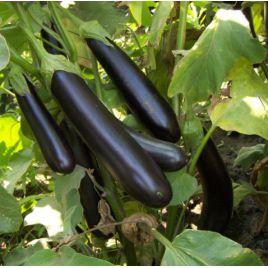 Самар F1 семена баклажана среднего 110-115 дн. 300-350 гр. 16-22 см удл.-цил. (Гавриш) НЕТ СЕМЯН