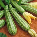 Зебра семена кабачка-цукини (Свитязь)