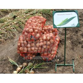 Экзакта F1 (Exacta F1) семена лука репчатого раннего до 800г (Seminis)