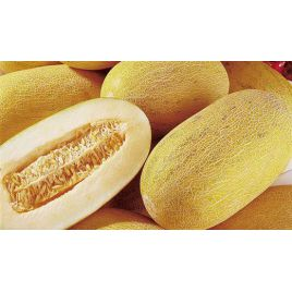 Торпедо семена дыни (GL Seeds)