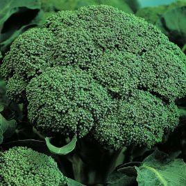 Себастьян семена капусты брокколи ранней 0,5-1 кг (Элитный ряд)