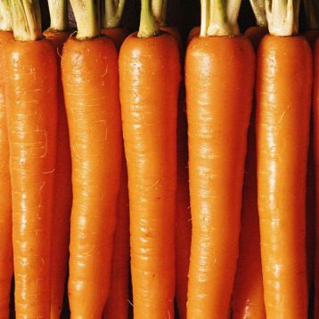 Кораль семена моркови (Свитязь)