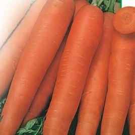 Флайови семена моркови (Свитязь)