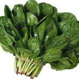 Лонг стендинг семена шпината овал. (Hortus)