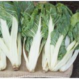Мангольд Лукулус зеленый семена (GL Seeds)