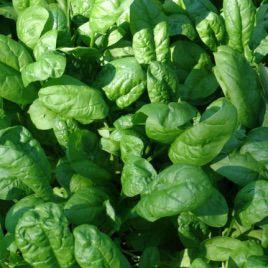 Матадор семена шпината (Hortus)