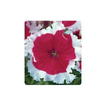 Петуния Серенада Cherry (черри)