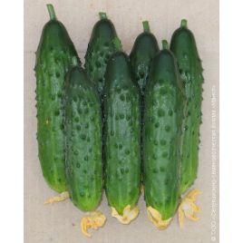 Секрет фирмы F1 семена огурца партенокарп. 12-14 см (Элитный ряд)