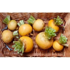 Голден Бэл семена репы желтой (Элитный ряд)