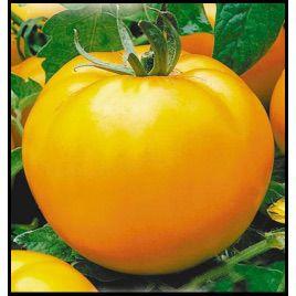 Апельсин семена томата индет. раннего 105-110 дн. окр. 200-300 гр. оранж. (Элитный ряд)