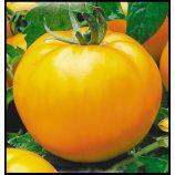 Апельсин семена томата индет оранжевого (Элитный ряд)