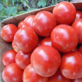 Магма F1 (053) семена томата дет. 130 гр. (Erste Zaden) НЕТ ТОВАРА