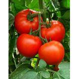 Макарыч F1 семена томата дет (Элитный ряд)