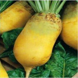 Урсус Полі насіння жовтого кормовог буряка (Польща)
