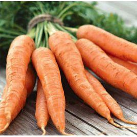 Аурантина F1 семена моркови Нантес (Takii Seeds)
