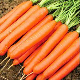 Белградо F1 (2,0-2,2мм) семена моркови Берликум средней 111 дн. (Bejo)