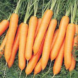 Белградо F1 (2,2-2,4мм) семена моркови Берликум средней 111 дн. (Bejo)