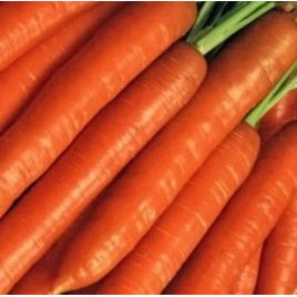 Берликум семена моркови среднепоздней 125-135 дн. (Hortus)
