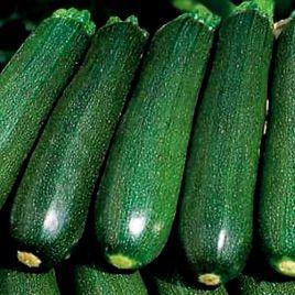 Темно-зеленый Грин семена кабачка (Hortus)