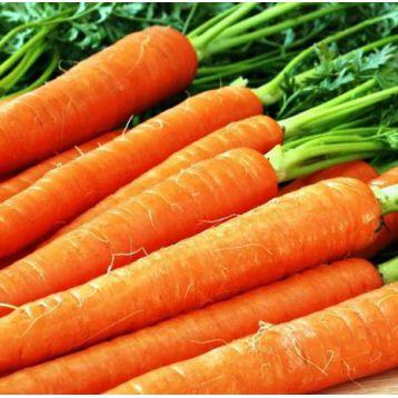 Голландка семена моркови (Свитязь)