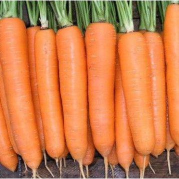 Долянка семена моркови (Свитязь)