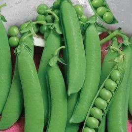 Овощное чудо семена гороха овощного (Свитязь)
