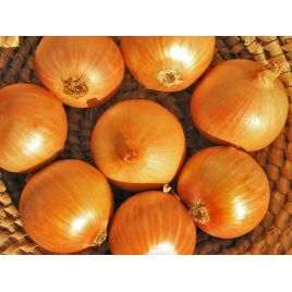 АМГ 1120 (АМG 1120) F1 семена лука репчатого среднего (AMG) СНЯТО С ПРОИЗВОДСТВА