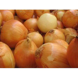 Стригуновский носовская семена лука репчатого озимого белого (Свитязь) НЕТ ТОВАРА
