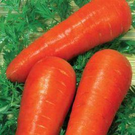 Красавка семена моркови Шантане ранней 90 дн. (Элитный ряд)