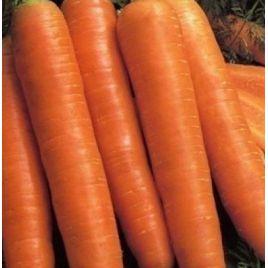 Красный Великан семена моркови поздней 140-160 дн. (Satimex СДБ)