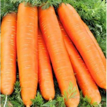 Красный Великан семена моркови (Свитязь)