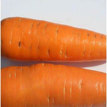 Нью Курода семена моркови Курода (Euroseed)