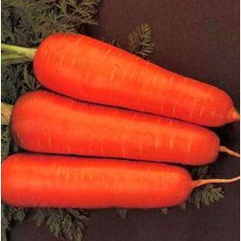 Курода семена моркови ранней 85-90 дн. (Rem seeds) НЕТ ТОВАРА