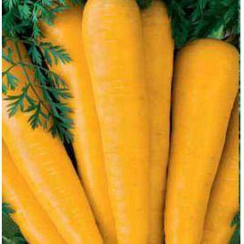 Лоберишер семена моркови Флакке поздней желтой (Hortus)