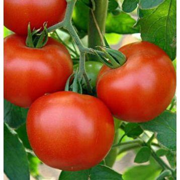 Юсуф 408 F1 семена томата дет. ранний окр. 180-220 гр (Enza Zaden)
