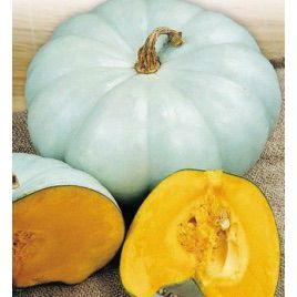 Волжский серый семена тыквы крупноплодной средней 100-120дн. 6-9 кг (Украина СДБ)