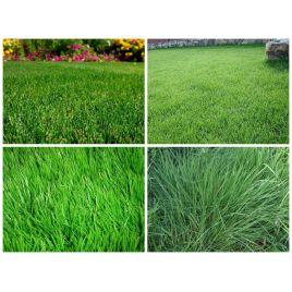 2016 семена газонной травы для спортивных объектов (Turfline)